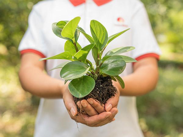 环境可持续发展